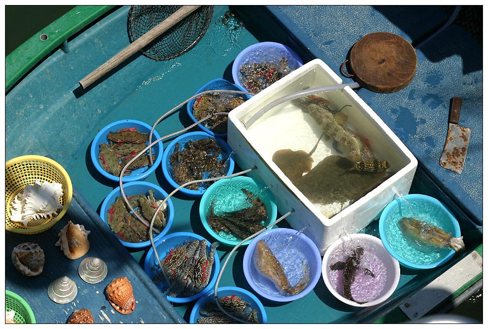 Frische Meeresfruechte zum Lunch in Sai Kung