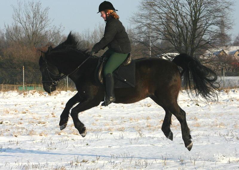 Frische Pferde:-)