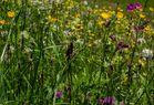 Frische Wiesenblumen.....