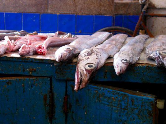 Frischer Fisch auf dem Markt von Agadir