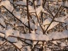 Frischer Schnee 2