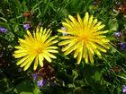 Frisches Frühlings-Gelb