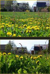 Frisches Grün und Blumen