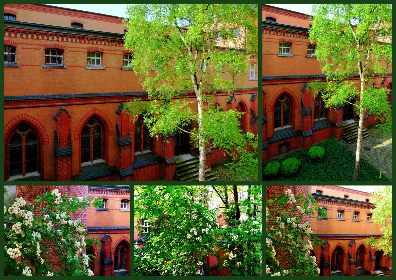 Frisches Grün vor alten Mauern