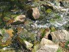 Frisches Quellwasser