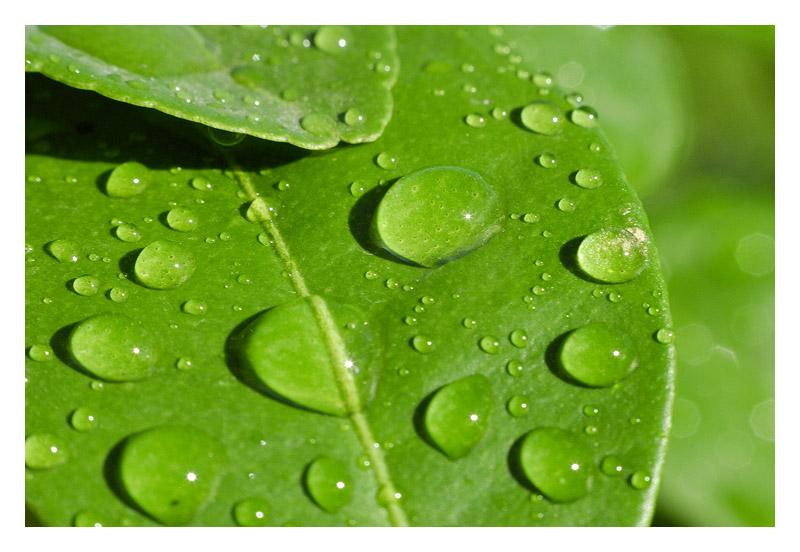 ... frisches saftiges Grün ...