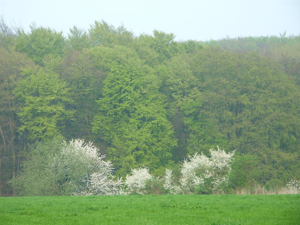 Frisches, zartes Frühlingsgrün mit aufblühenden Obstbäumen