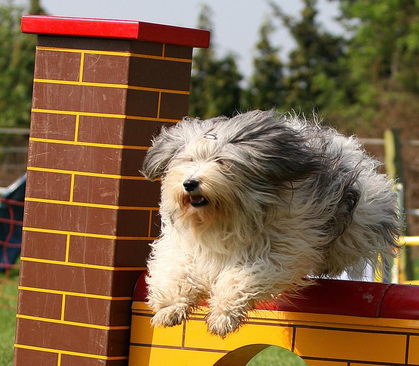 Frisurentrends im Hundesport