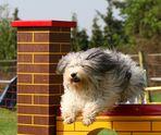 Frisurentrends im Hundesport nun gerade