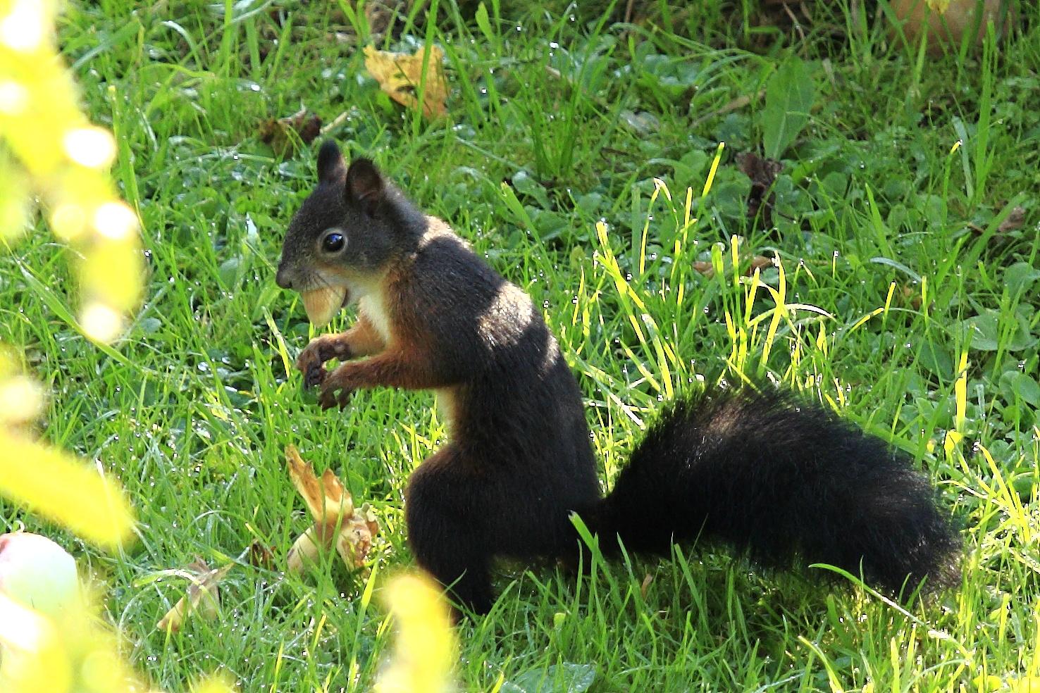 Fritz, das Eichhörnchen 3