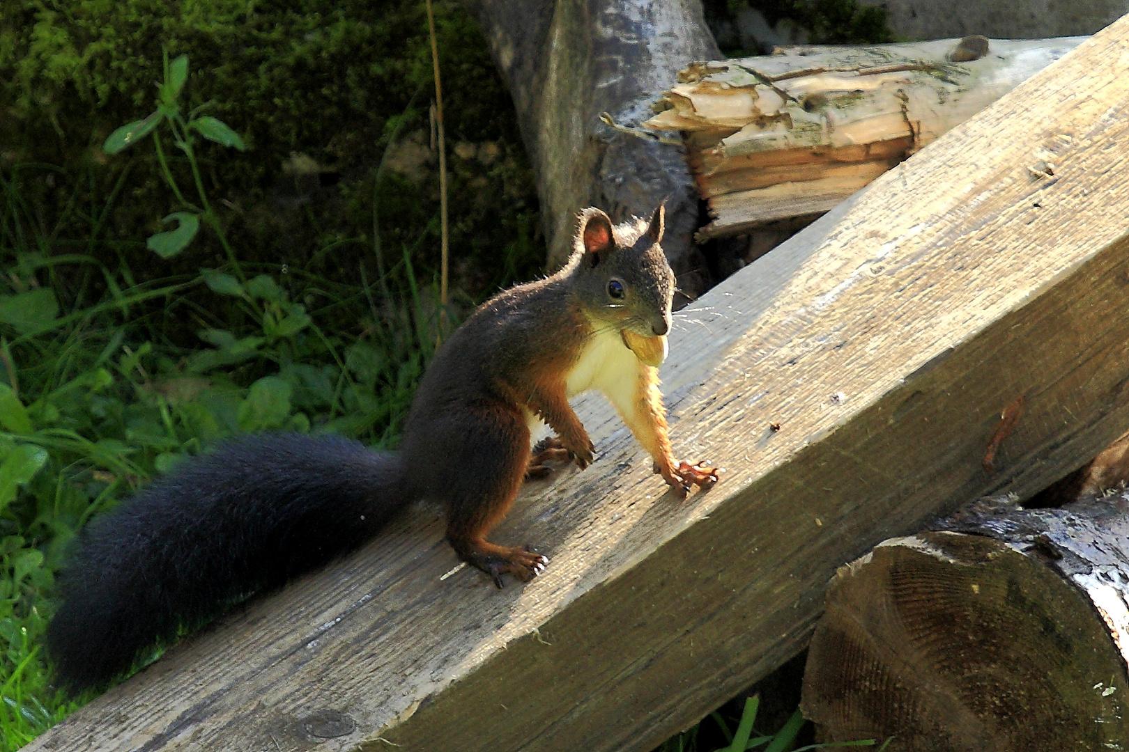 Fritz, das Eichhörnchen 5