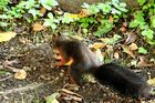 Fritz, das Eichhörnchen 8