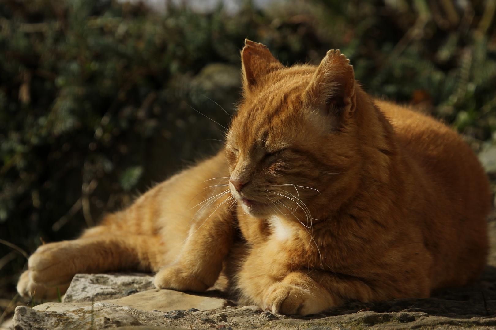 Fritz geniesst die Wärme der Sonne