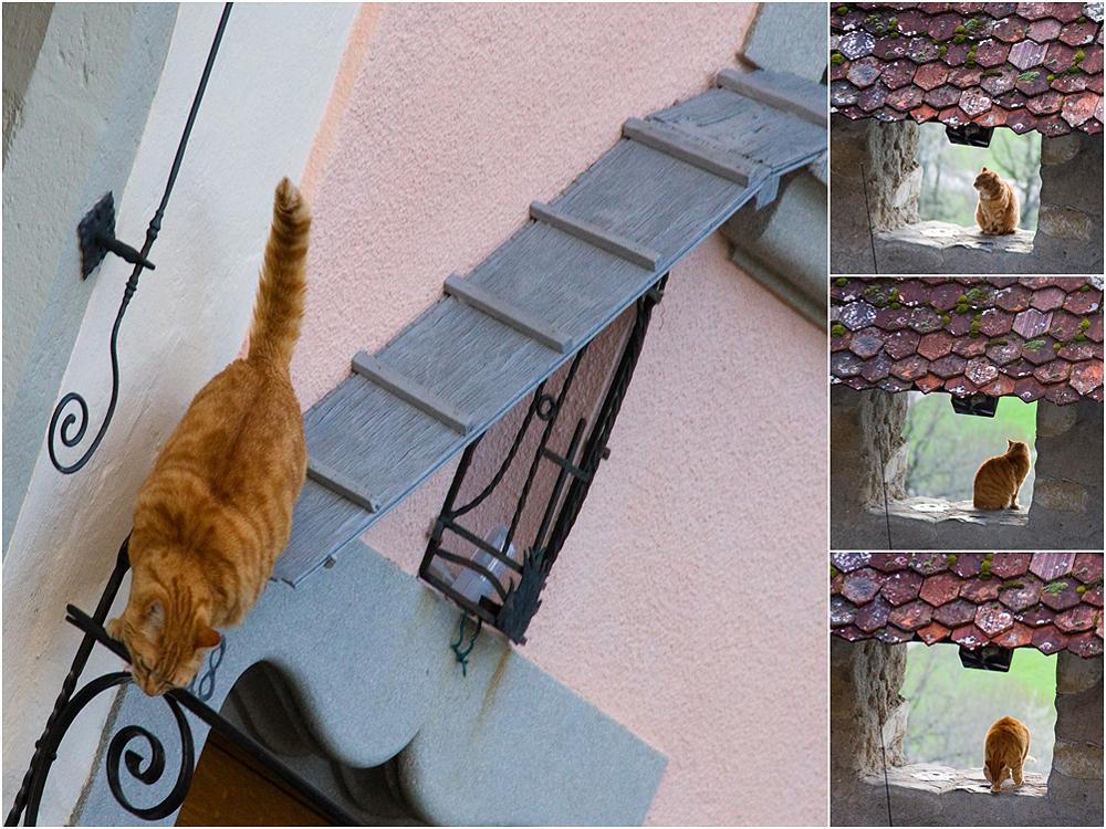 Fritz macht einen Ausflug