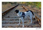 Fritzi wartet auf den Zug.....ziemlich mutig :-)