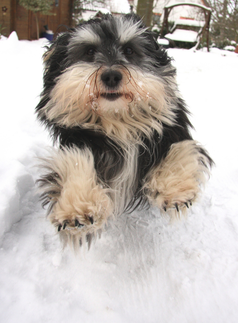 Fritzmann im letzten Schnee...