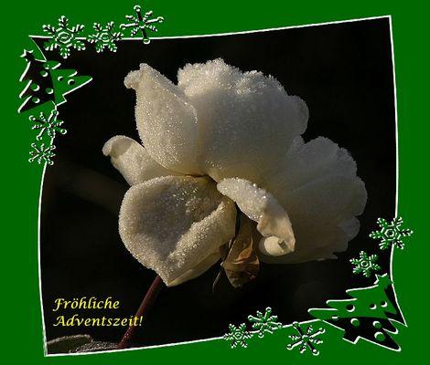Fröhliche Adventszeit!