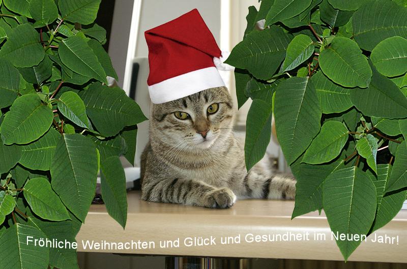 Fröhliche Weihnachten!!!