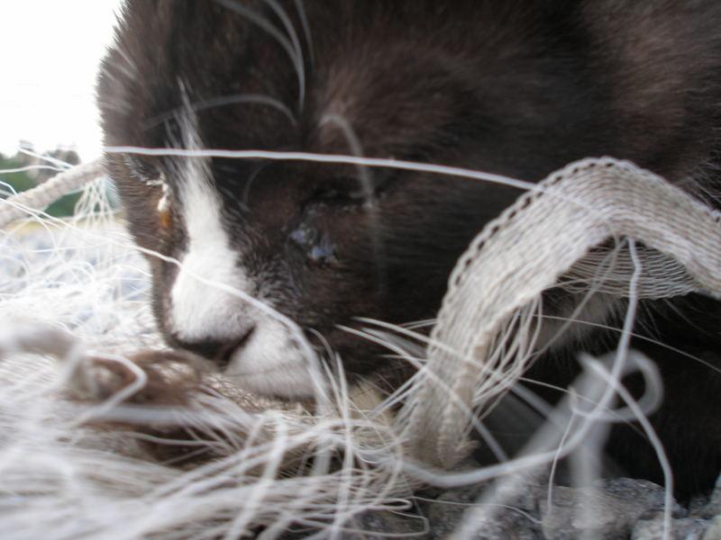 Fröken Jansson the kitten