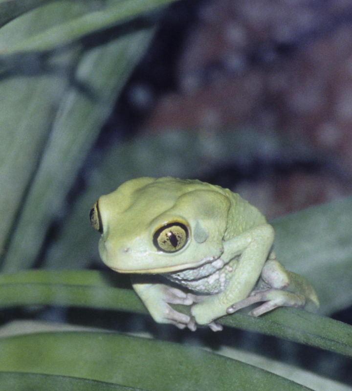 Frog at rest