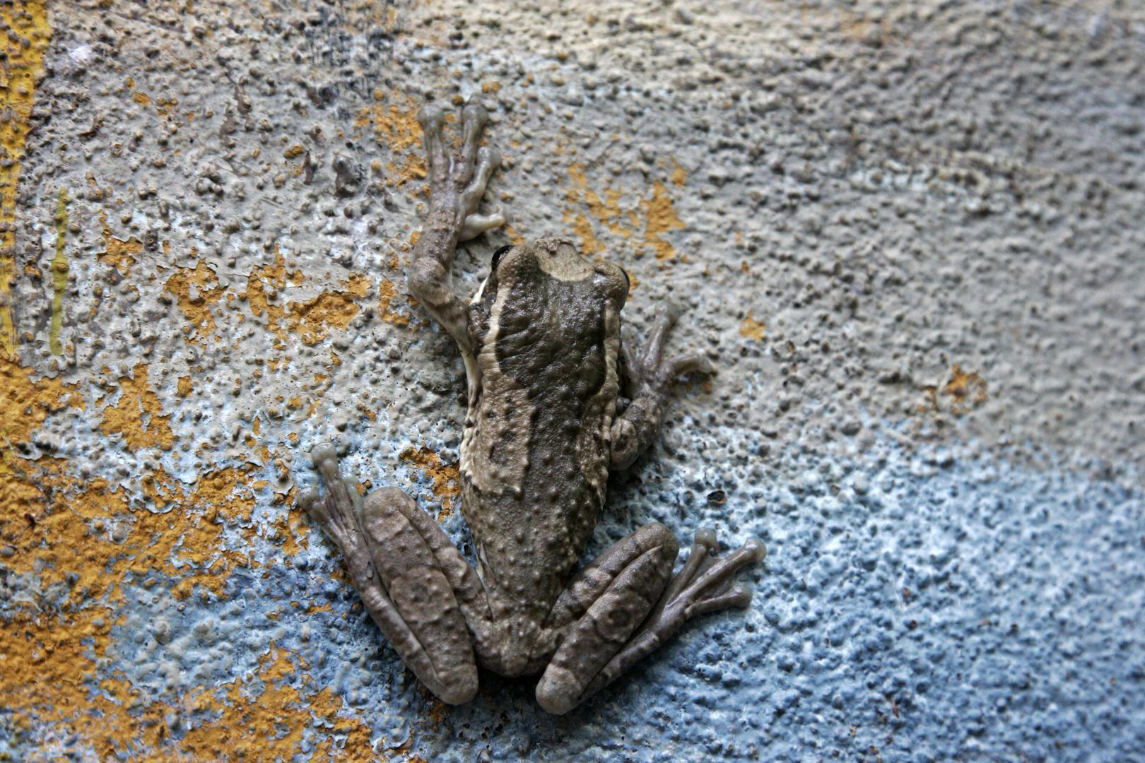 Frog at the wall
