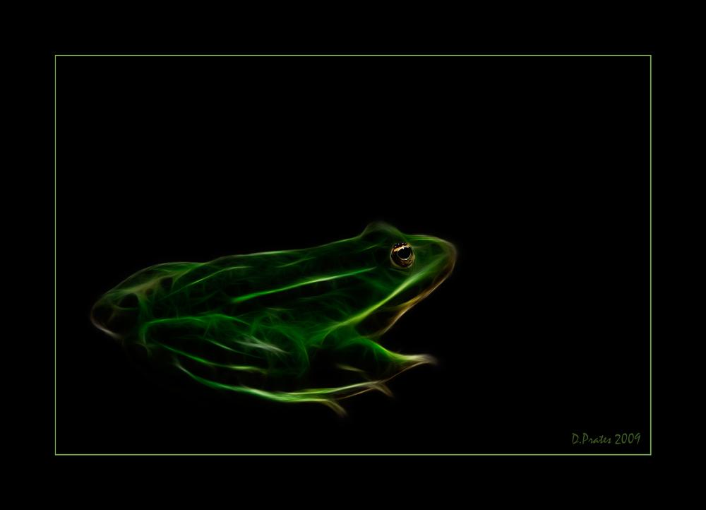- Frog -