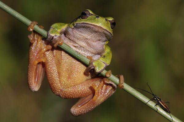 Frog meets Bug