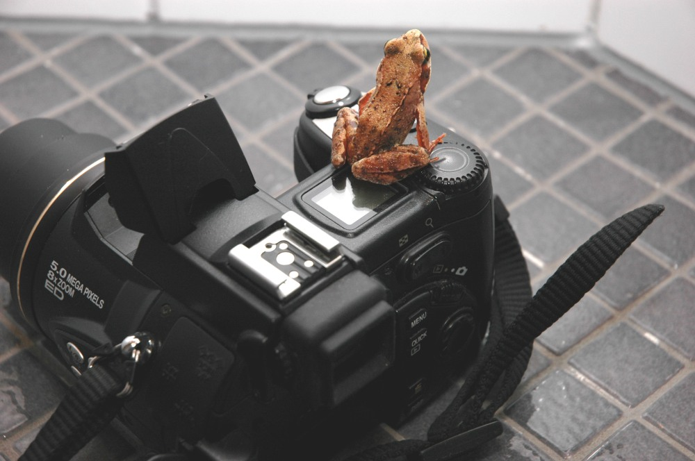 Frog -taking a picture.