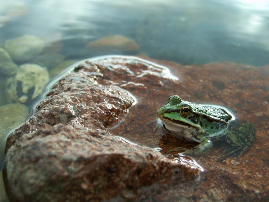 frog van hussle