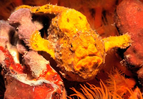 FROGFISH [Cliffhanger]