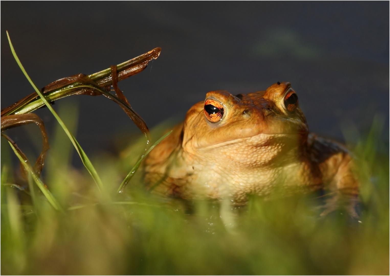 Froggi