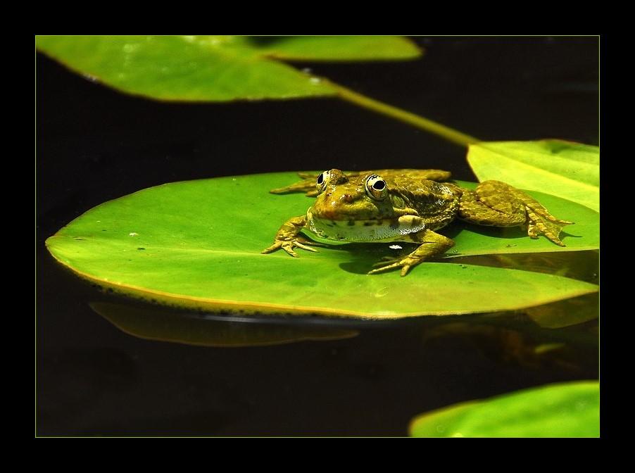 froggie....
