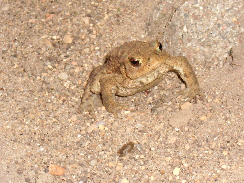 Froggy...