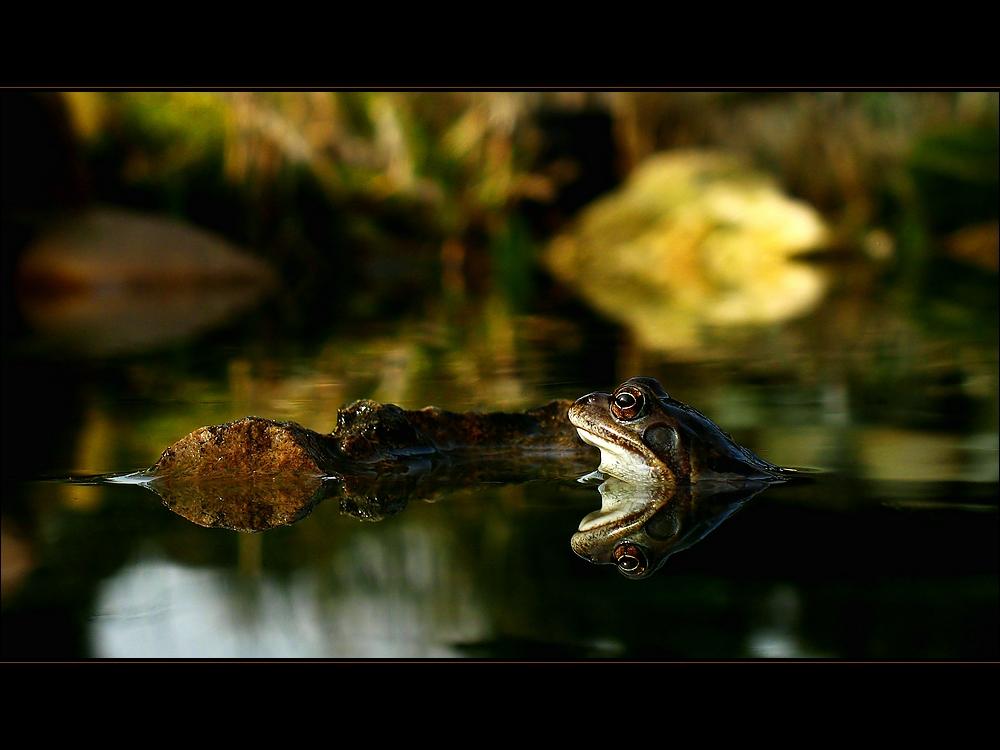 Froggy beim Sonnenbad (re)