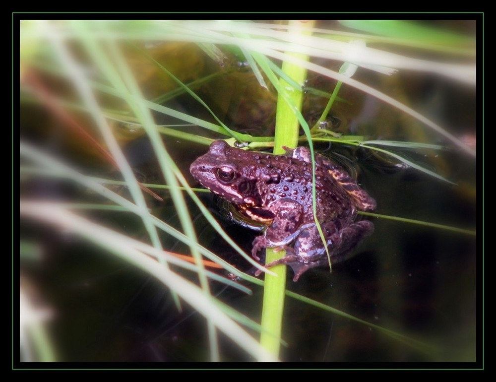 FROGGY MA GRENOUILLE