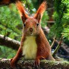 Frohe - Eichhörnchen - Ostern :-)
