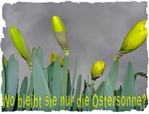........Frohe Ostern........