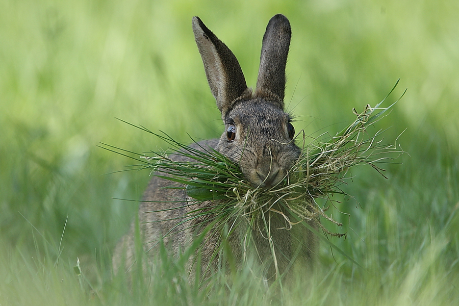 Frohe Ostern !!!!