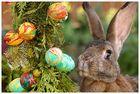 Frohe Ostern allen FClern...