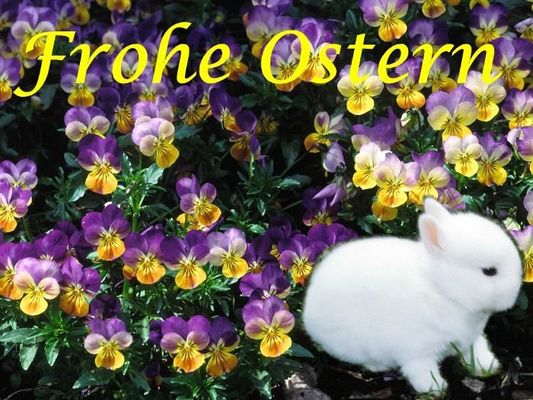 Frohe Ostern an alle Fotofreunde