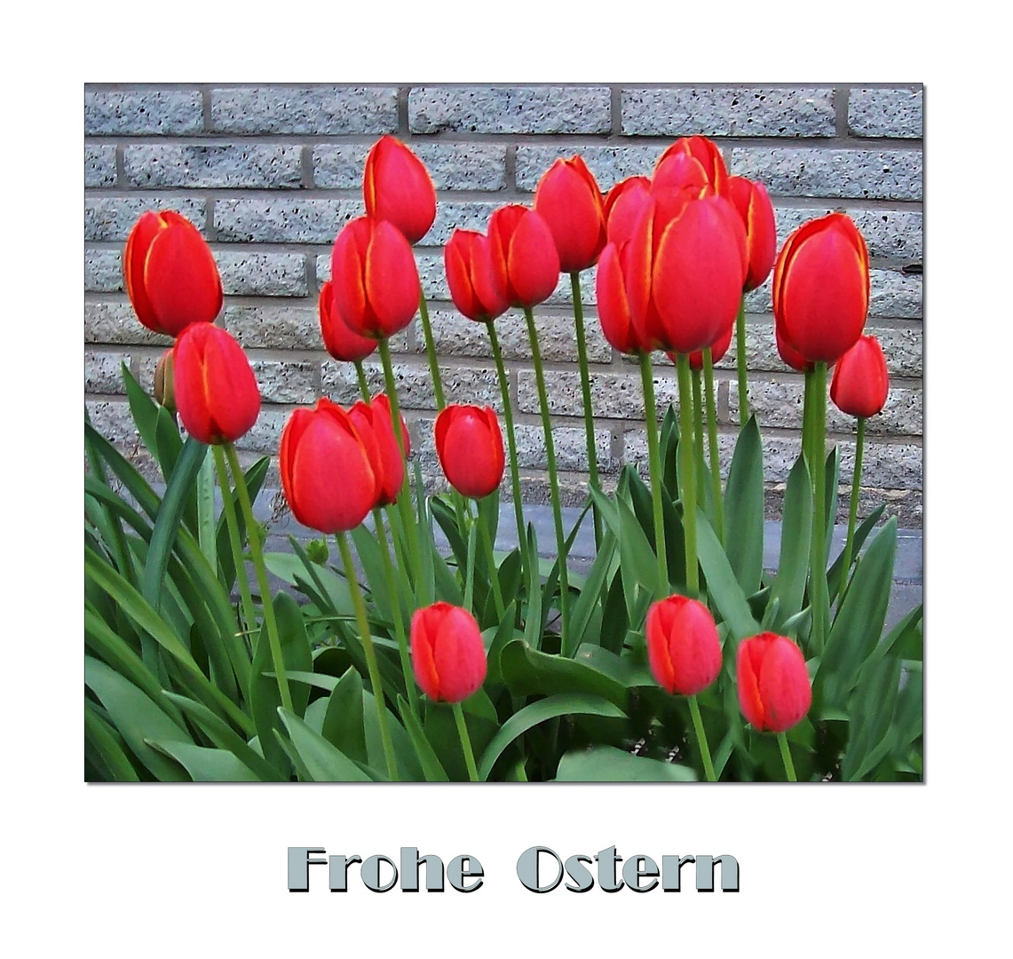 °° Frohe Ostern °°