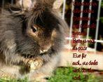 Frohe Ostern für alle !!!