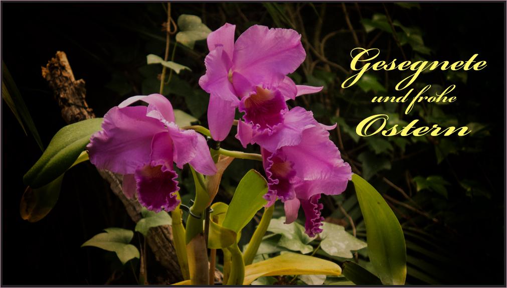 Frohe Ostern wünsch ich Euch allen...