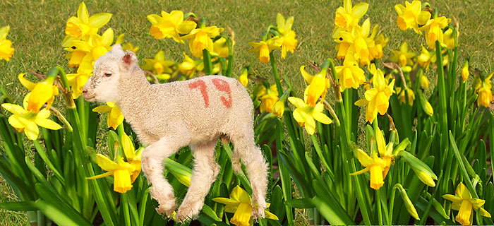 Frohe Ostern wünsche ich allen FC-ler'n!!!!!!!