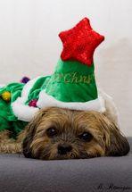 Frohe Weihnachten!!!