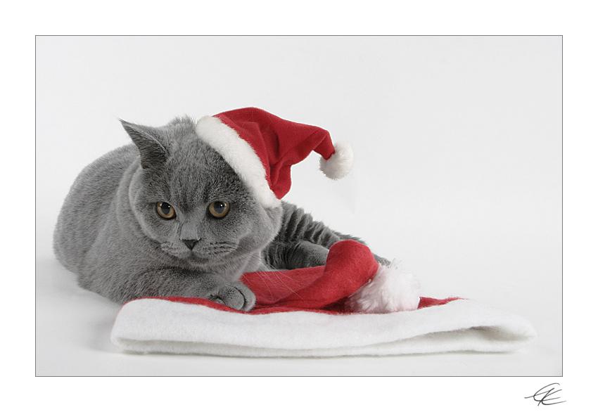 frohe weihnachten bild foto von ii esther ii aus. Black Bedroom Furniture Sets. Home Design Ideas