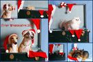 Frohe Weihnachten 2012 von Sabine Zdravkovic