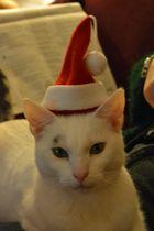 """""""Frohe Weihnachten 2012 an alle Buddies!!!!"""
