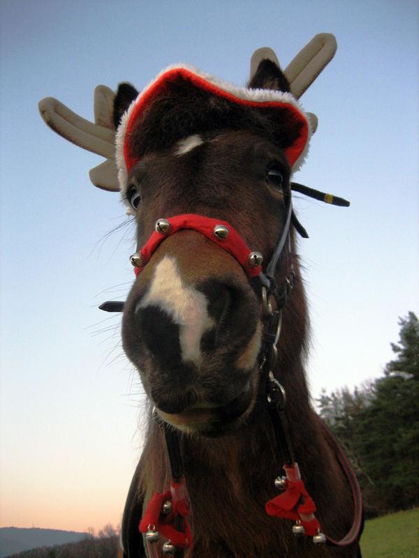 frohe weihnachten foto bild tiere haustiere pferde. Black Bedroom Furniture Sets. Home Design Ideas