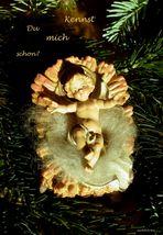 Frohe Weihnachten allen Fc'lern!